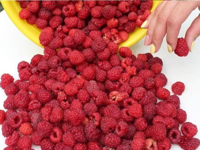 Урожай малины сорта Бабье лето