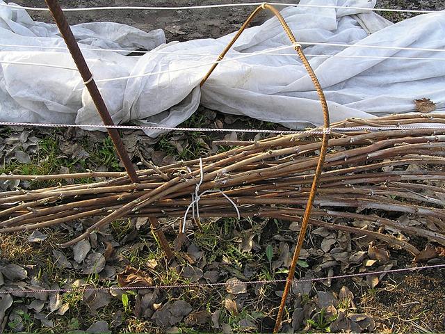 Підготовка ремонтантной малини до зими