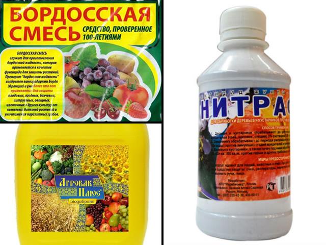 Средства защиты малины от болезней: Бордосская смесь, нитрафен, агробак плюс