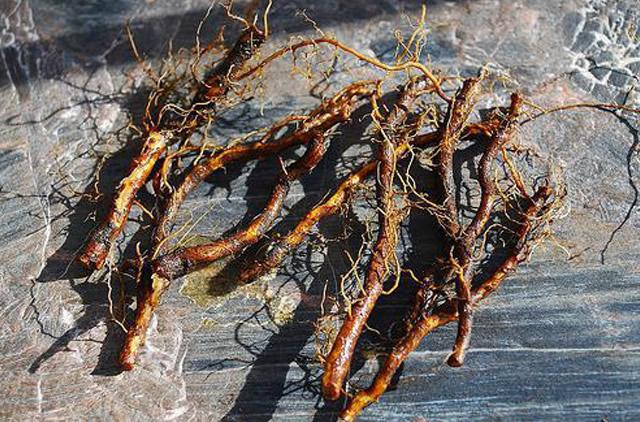 Посадка малины корневыми черенками