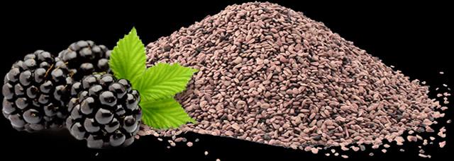 Выращивание ежевики из семян
