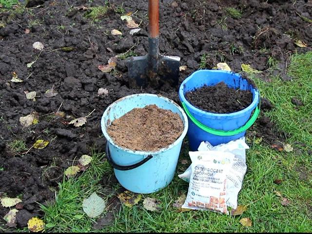 Удобрения для подкормки малины весной и осенью
