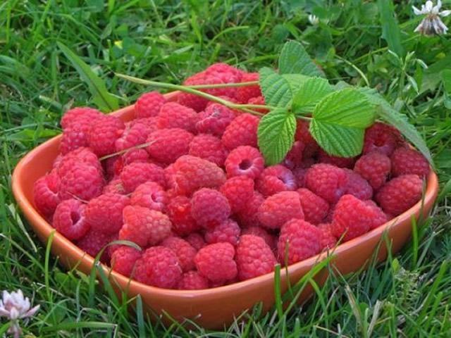 Урожай малины Киржач