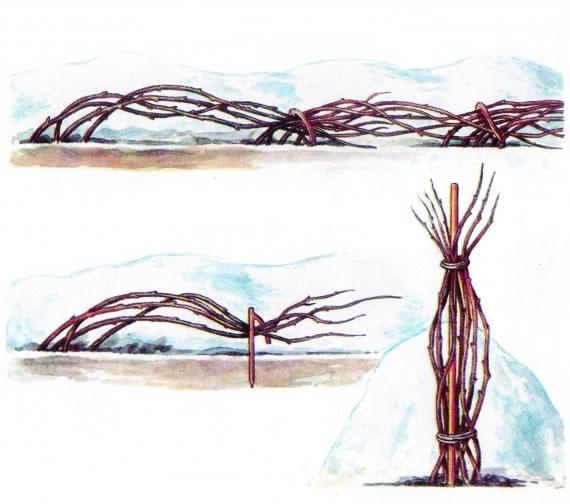 Подготовка малиновых кустов к зиме