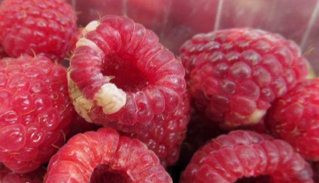 Белые пятна на ягодах малины