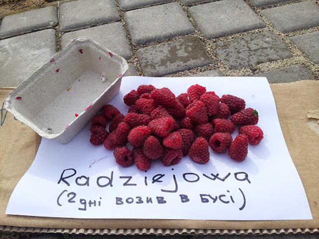 Польская малина Радзиева