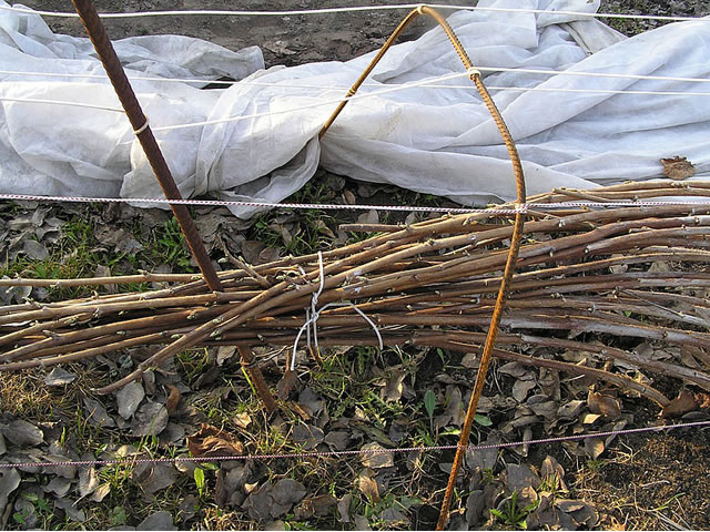 Подготовка малины к сибирской зиме