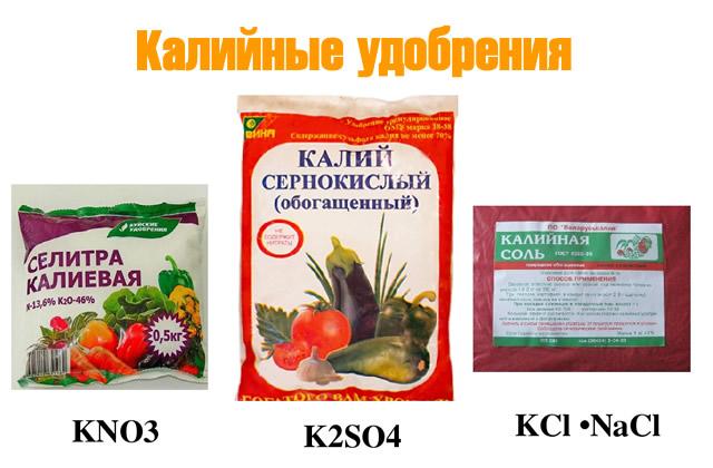 Калийные удобрения для малины