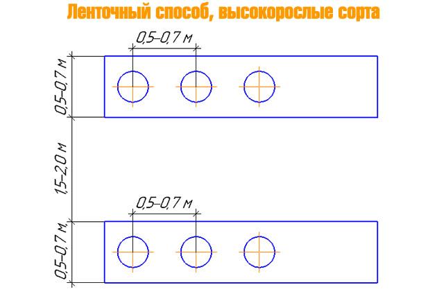Схема посадки малины Татьяна