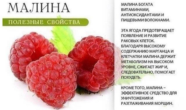 Полезные свойства ягод малины