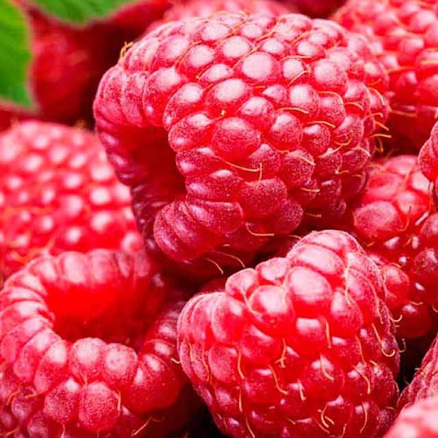 Крупные ягоды малины Рубиновый гигант