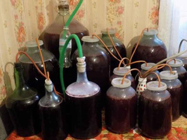Ежевичное вино на гидрозатворе