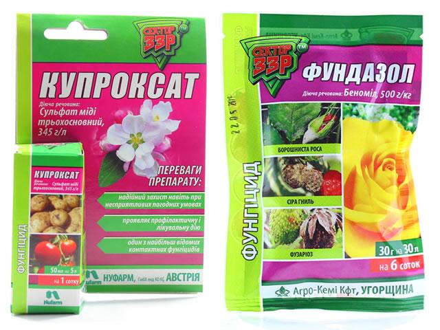 Купроксат и Фундазол для борьбы с пурпуровой пятнистостью малины