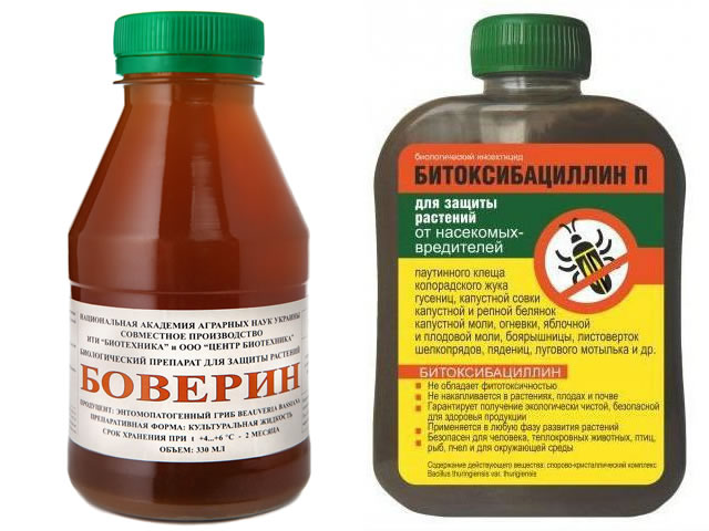 Биологические препараты для борьбы с клопами на малине