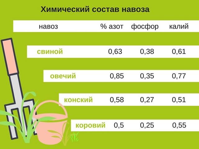 Химический состав навоза для подкормки малины