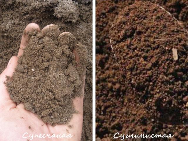 Выбираем лучшую почву для малины