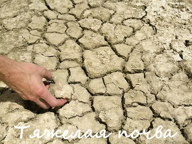 Тяжелая почва не подходит для посадки малины