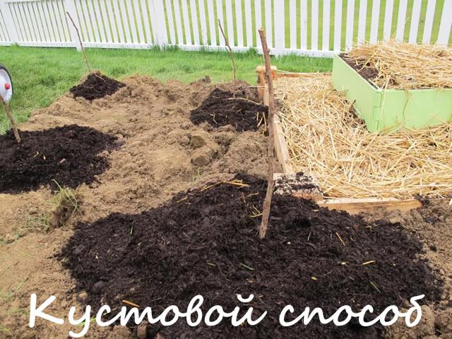 Кустовой или ямочный способ посадки малины