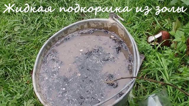 Жидкая подкормка из золы