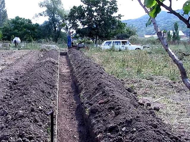 Формирование траншеи для посадки малины сорт Красная королева