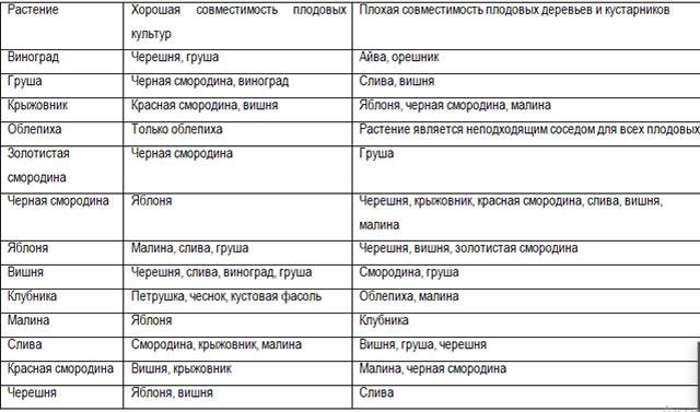 Таблица совместимости малины с другими культурами